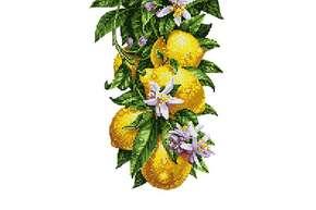 Схема для вышивки бисером POINT ART Цветущие лимончики, размер 20х28 см, арт. 1982