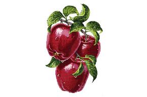 Набор для вышивки бисером POINT ART Красные яблоки размер 20х28 см арт. 1828